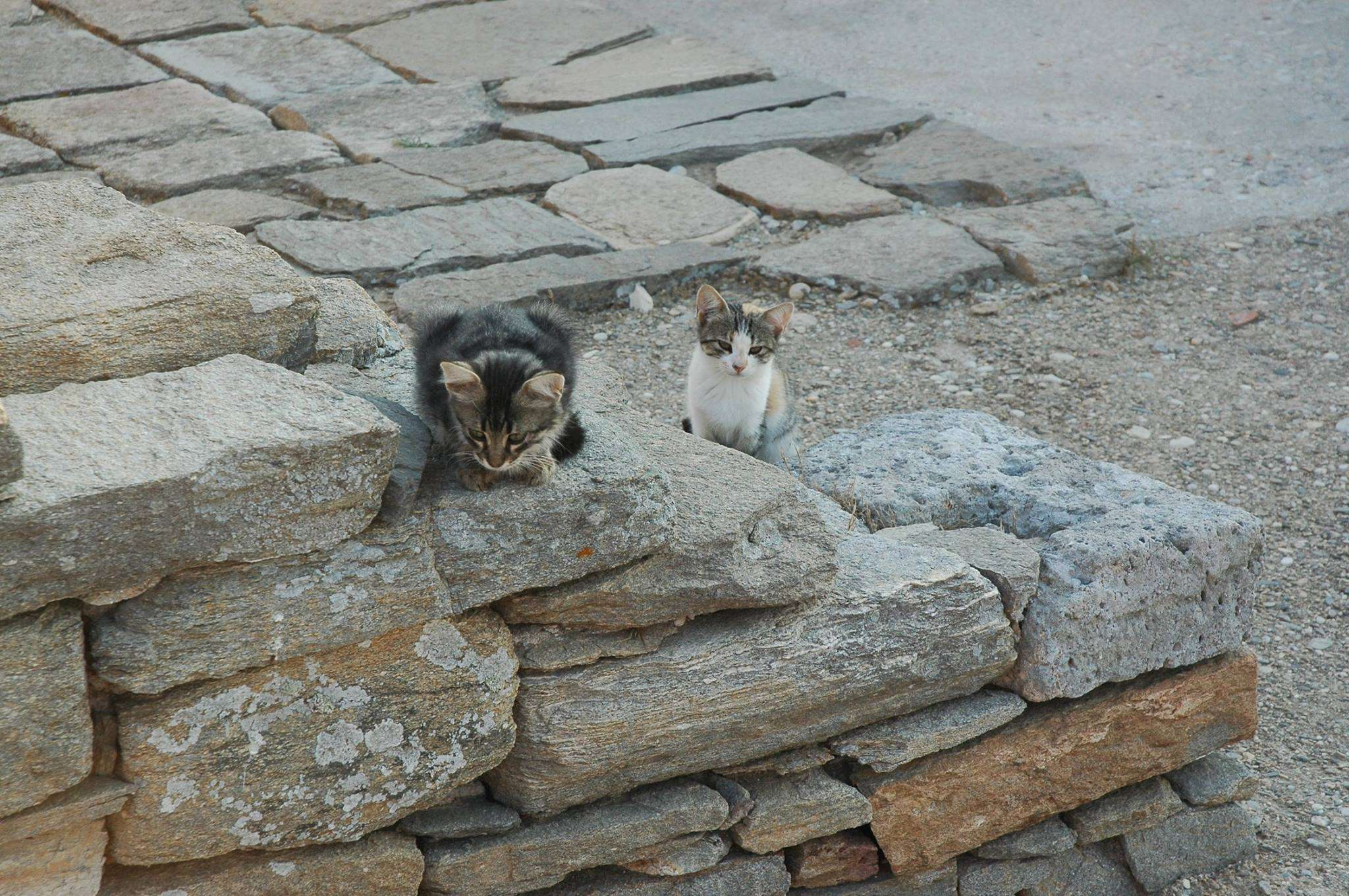 Adorable kittens on Delos Island