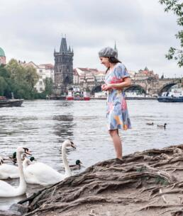 Feeding swans at Park Cihelná, Prague