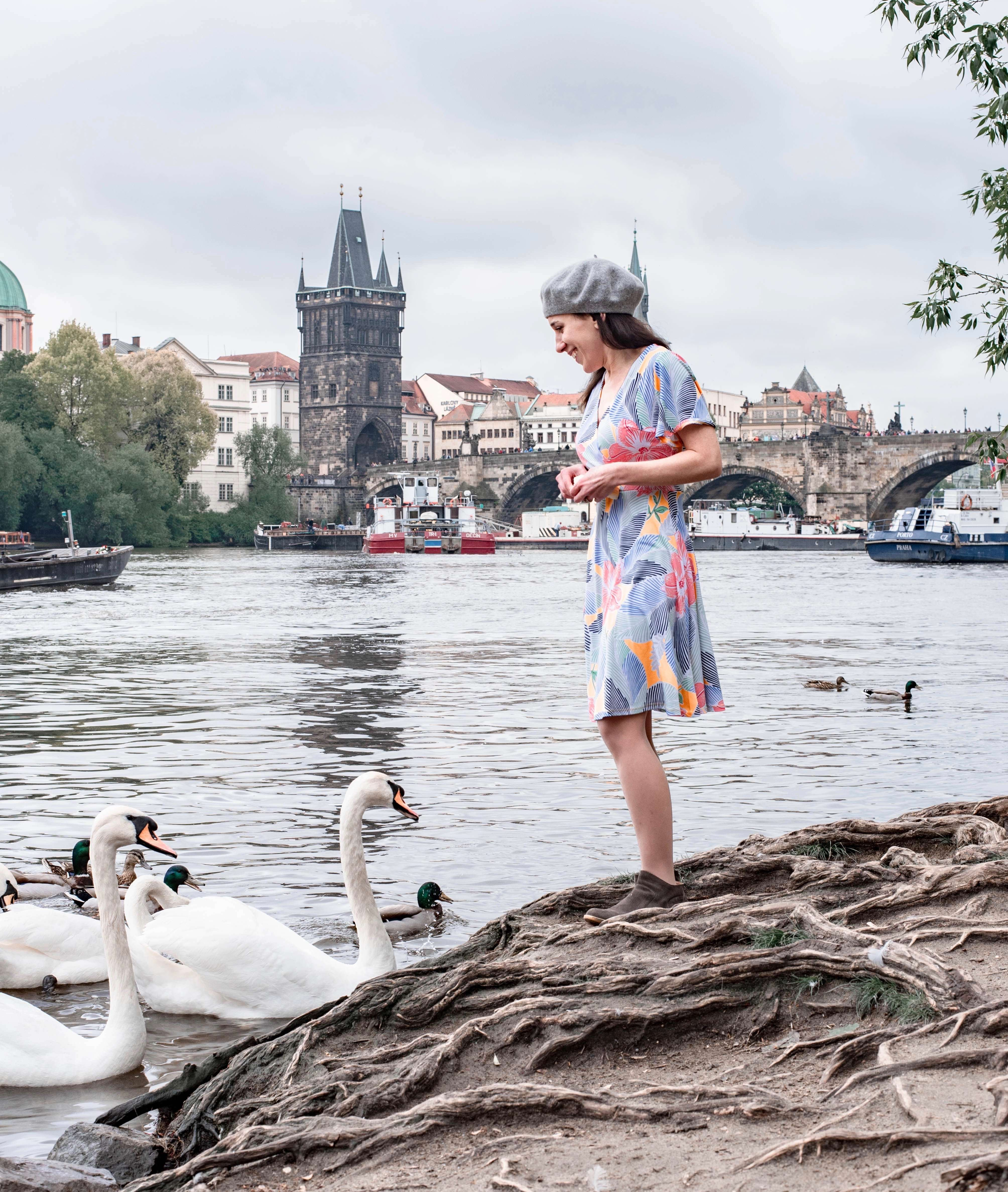 Feeding swans at Park Cihelná, Prague