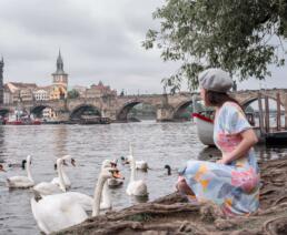 swans at Park Cihelna, Prague