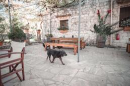 Dog at Dourakis Winery, Crete