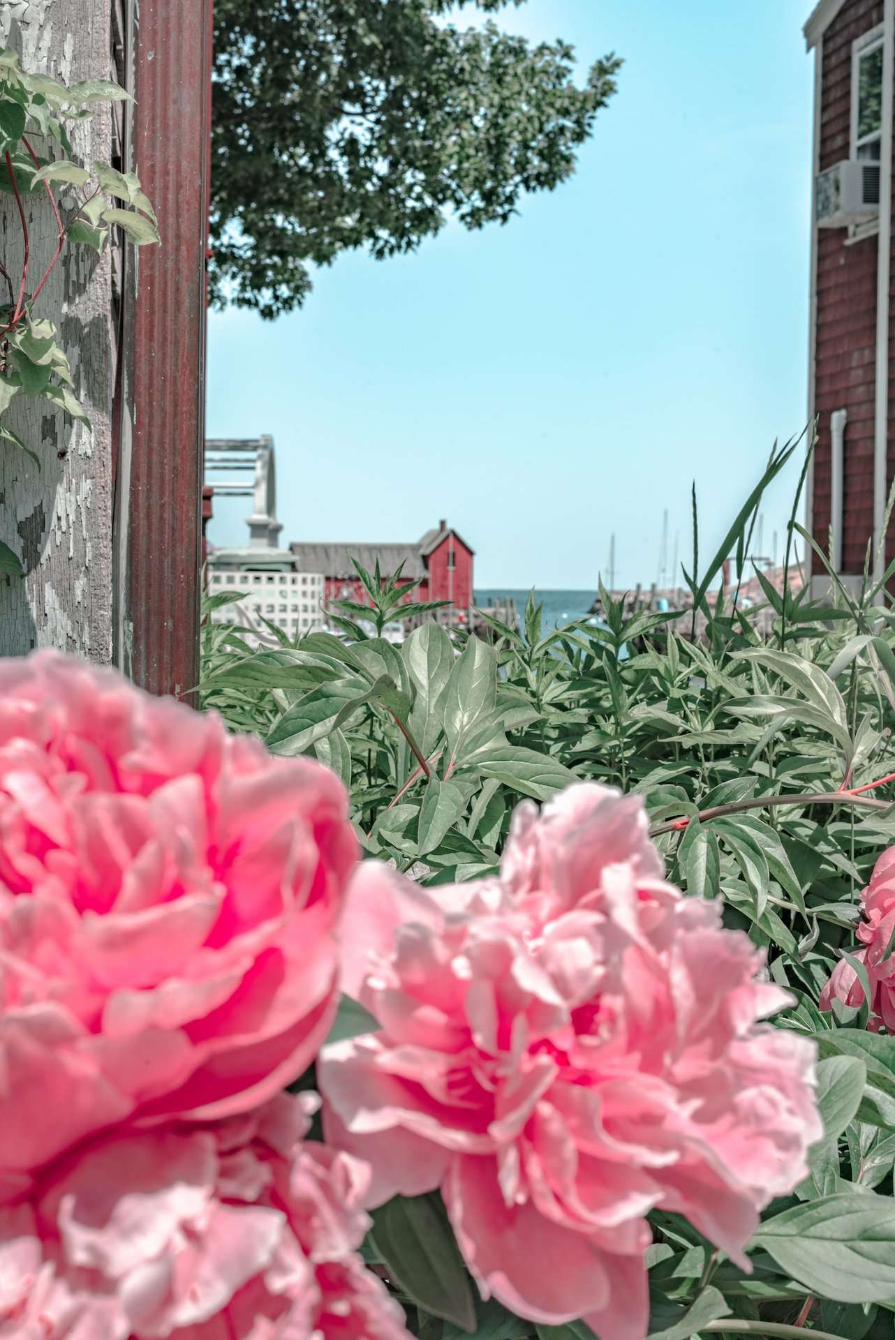 Motif #1 surrounded by flowers in Rockport