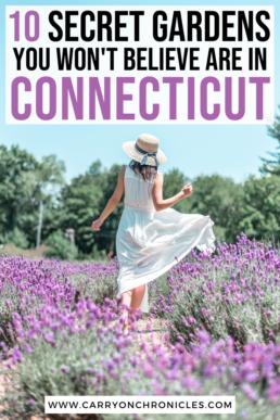 lavender farm in Connecticut