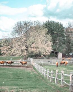 Billings Farm & Museum
