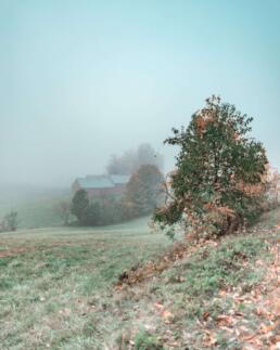foggy day at Jenne Farm